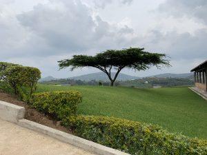 Murambe